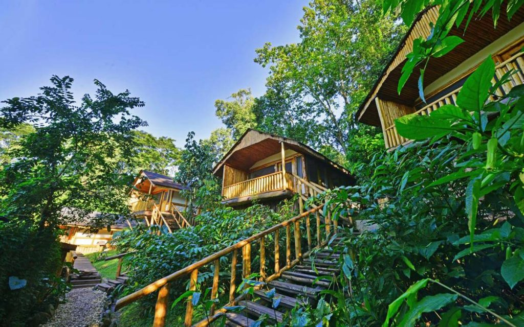 Accommodation in Bwindi Impenetrable Forest