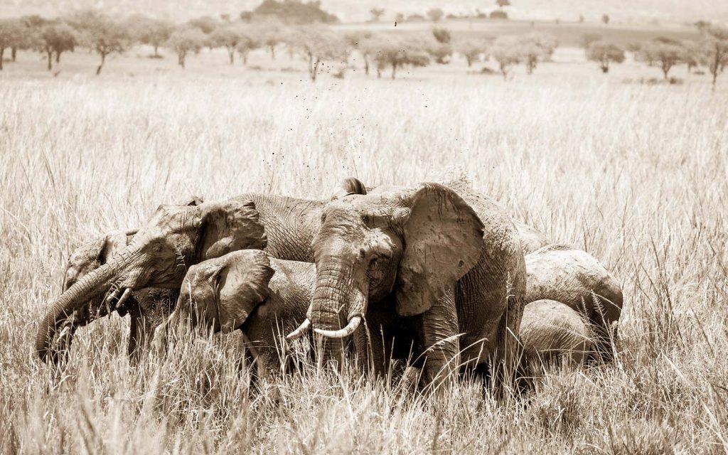 Wildlife Viewing Game drives on Africa safari
