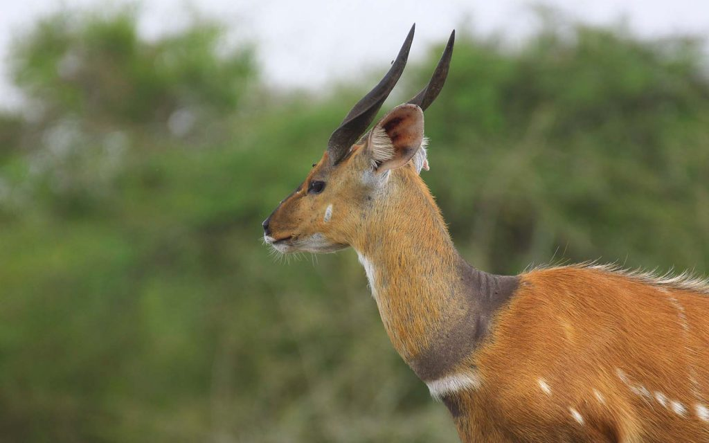 lake mburo wildlife viewing game drives