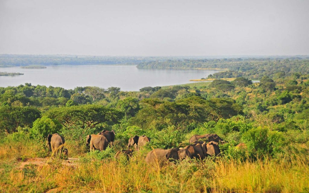 Murchison Falls National Park Game drives