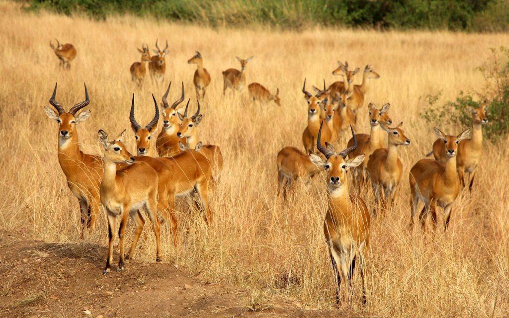 wildlife viewing in Queen Elizabeth National Park