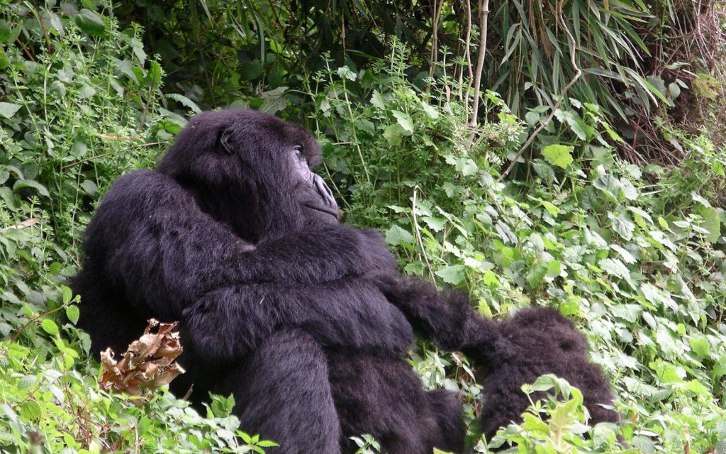 Bwindi Gorillas & Sabinyo Hiking Tour