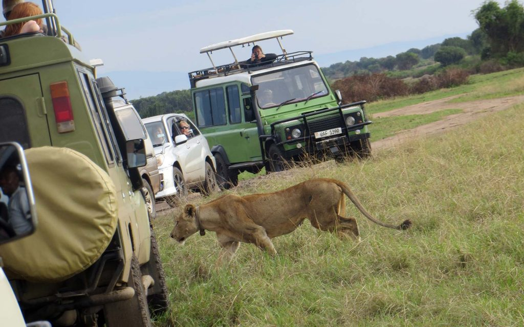 Wildlife Viewing Game Drives on Africa safari
