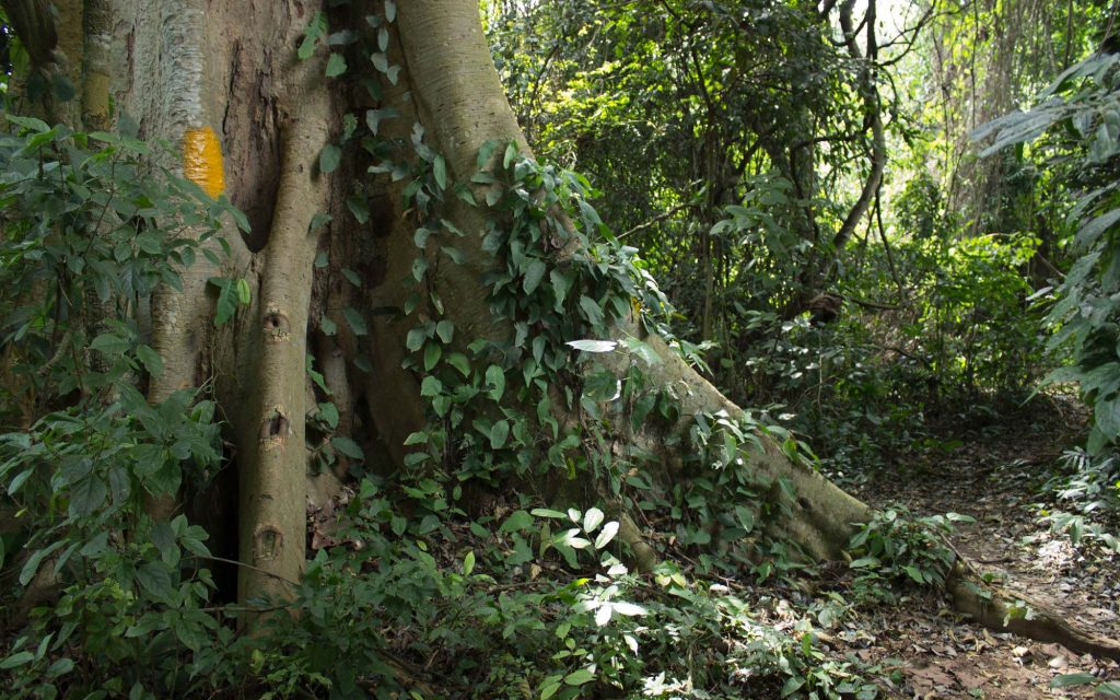 Mabira forest attractions