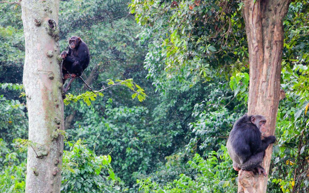 Attractions at Ngamba Island
