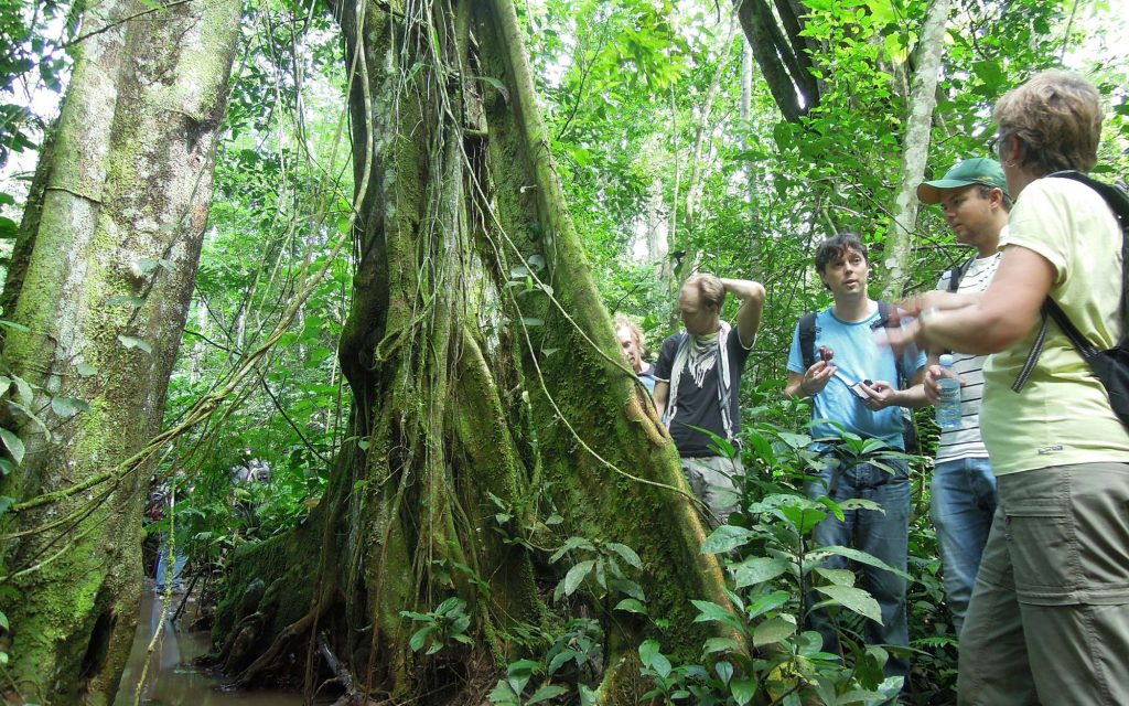 Mabira forest botany attractions
